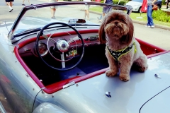 Dog's-Life